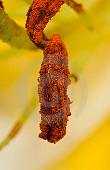 Macro Pollen Stock Image - Image: 19906431