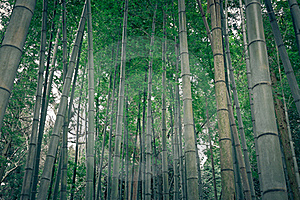 Bamboo Forest In Rural Japan Royalty Free Stock Photos - Image: 19906678