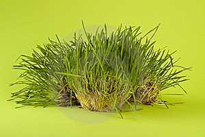 Green Wheat Royalty Free Stock Photo - Image: 19913315