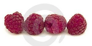 Raspberries Royalty Free Stock Photo - Image: 19914105