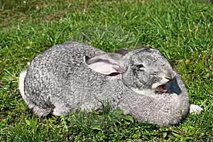 A Cute Funny Rabbit On A Grass Royalty Free Stock Photography - Image: 19916107