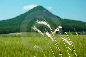 Wheat With Hill Royalty Free Stock Photo - Image: 19917335