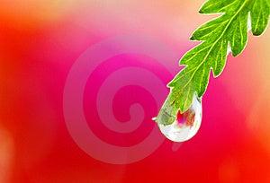 Close-up Of Wet Leaf Royalty Free Stock Photo - Image: 19919855