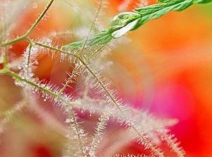 Close-up Of Wet Leaf Royalty Free Stock Image - Image: 19919876