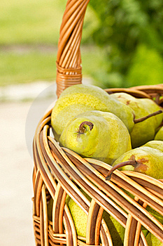 Pears In The Basket Stock Photography - Image: 19925352