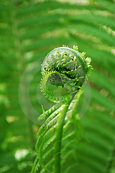 Fern Stock Images - Image: 19927944