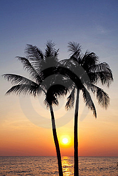 Palm Forest Stock Photography - Image: 19929862