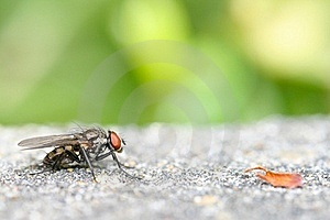 Fly And Leaf Royalty Free Stock Image - Image: 19930276