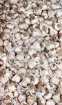 Farm Fresh Garlics Stock Image - Image: 19931431