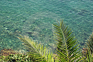 Palm Leaves And Sea Royalty Free Stock Photography - Image: 19932877