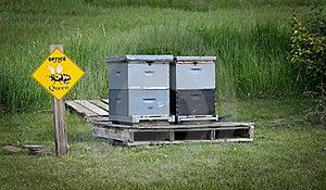 Honey Bee Hives Royalty Free Stock Photography - Image: 19952377