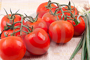 Red Tomatoes On A Branch Royalty Free Stock Images - Image: 19952519