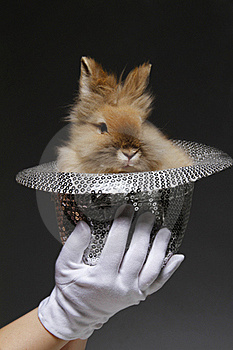 Rabbit In The Hat Stock Photos - Image: 19952983