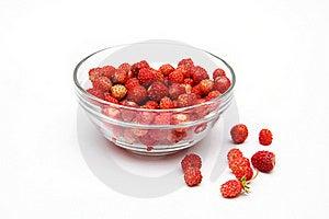 Wild Strawberries Stock Photo - Image: 19953190
