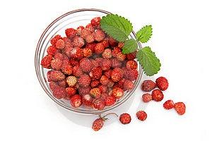 Wild Strawberries Stock Photography - Image: 19953232