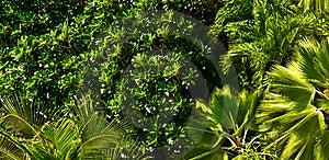 Dense Foliage Royalty Free Stock Photography - Image: 19957807