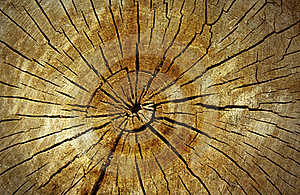 Wood Cut Royalty Free Stock Images - Image: 19967329