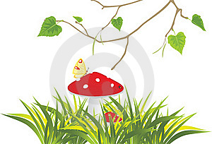 Fly Agaric Mushrooms In Grass And Birch Sprig Stock Image - Image: 19975081