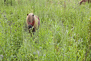Small Horse Royalty Free Stock Photography - Image: 19980627