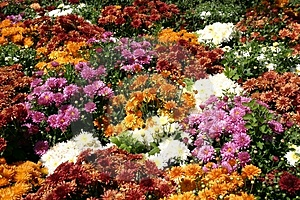 Flower Patch Royalty Free Stock Photo - Image: 20615