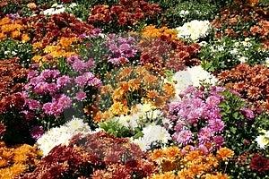 Remendo da flor Foto de Stock Royalty Free