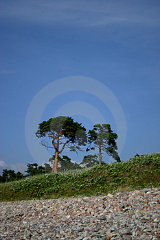 Lonely Trees Stock Images - Image: 20944