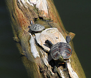 Turtles Stock Images - Image: 20964