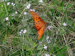 Butterfly in the Meadow Royalty Free Stock Photography