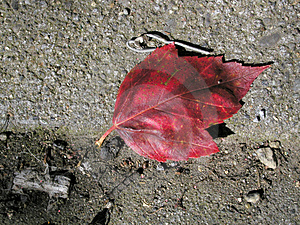 Red Leaf On The Sidewalk Royalty Free Stock Photos - Image: 21728