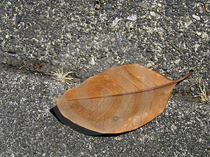 Brown Leaf On The Sidewalk Stock Image - Image: 21731