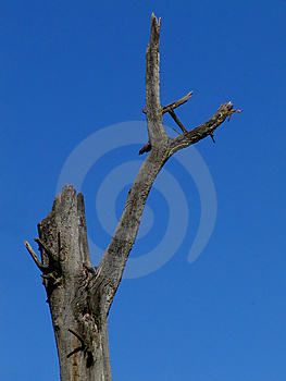 Dead Tree Stock Photography - Image: 26532