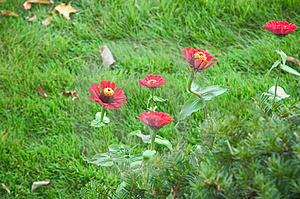 Fall Flowers Royalty Free Stock Photography - Image: 29187