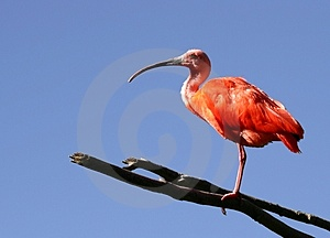 Waiting For You Stock Photography - Image: 29752