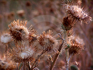 Prickle02 Stock Photos