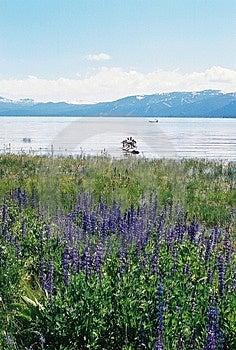 Лаке Таюое Невада с горами и цветками Стоковые Фотографии RF