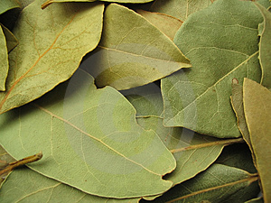 Bay Leaves Close-up Free Stock Photo