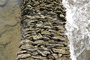 Sea Corral Stock Photo