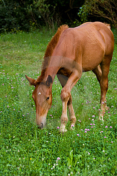 Foal Feeding Free Stock Photo