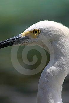 Белая птица Стоковые Изображения