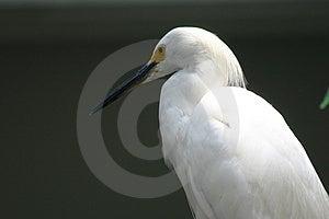 Белая птица Стоковое фото RF