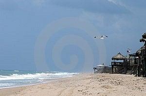 Gabbiano alla spiaggia Immagini Stock Libere da Diritti