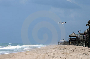 Fiskmås på stranden Royaltyfria Bilder