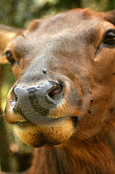 Deer Nose Stock Photos
