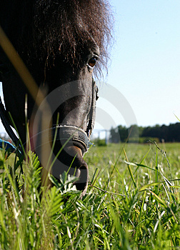 A pony Stock Photo