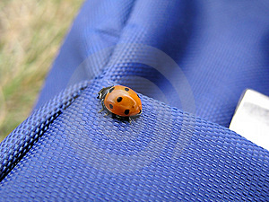 Ladybird 1 Royalty Free Stock Image
