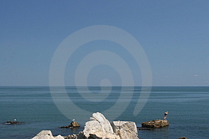 Sea-gulls and a swimmer Stock Image