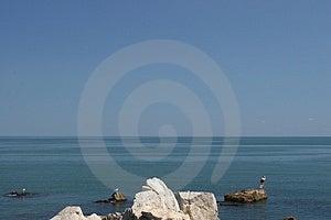 Zeemeeuwen en een zwemmer Stock Afbeelding