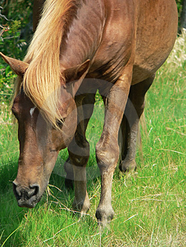 Wild Pony Stock Photography
