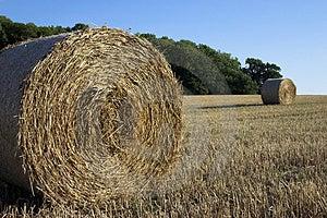 Tiempo de cosecha. Fotos de archivo