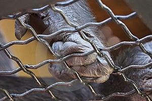 Ape's Hand Stock Photos
